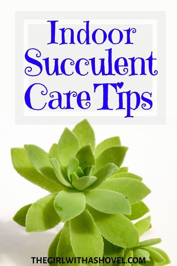Photo of Keep your Succulent Alive and Healthy!