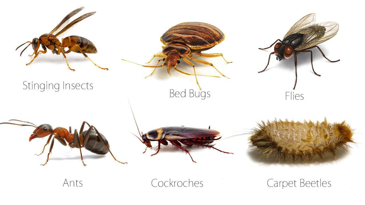 For More Enquiry Click Http Www Insightpestcontrol Com Au Pest Control Termite Control Best Pest Control