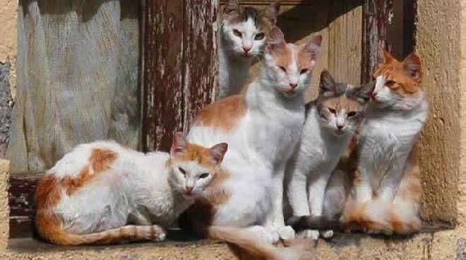 Sanremo invasa dai gatti randagi, 1 ogni 15 abitanti quasi un record ... - Riviera24.it - http://bit.ly/2qQDmg5 - Pet Community and Social Network