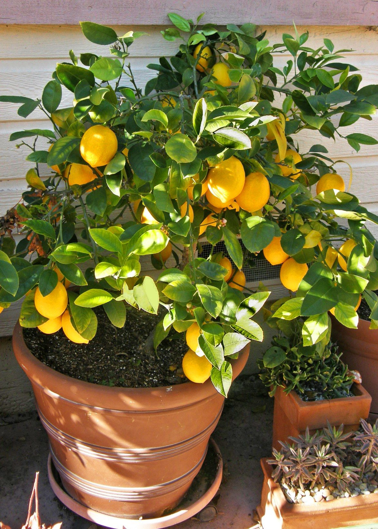 Arbre Fruitier D Intérieur the best indoor house plants and how to buy them | jardinage