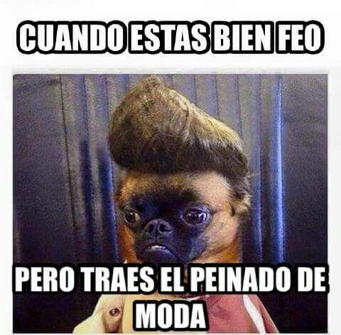 Solo Me Faltan Los Lentes Humor Mexicano Memes De Perros Chistosos Meme Chistosos