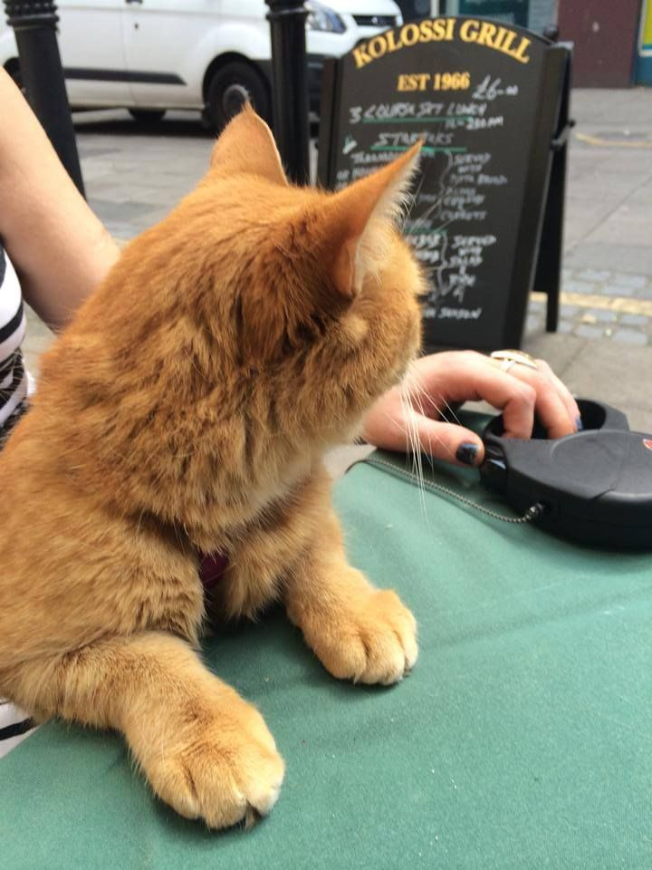 Time for grub, in Islington - from FB page James Bowen & Street Cat Bob