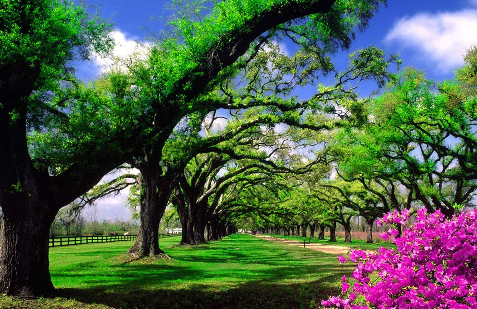 Fondo pantalla paisaje jard n paisajes escritorios y - Paisajes y jardines ...