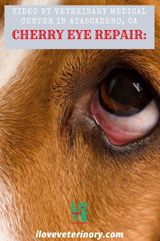 Pin on veterinary medicine