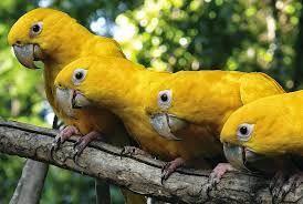 Resultado de imagem para parque das aves foz do iguaçu - pr