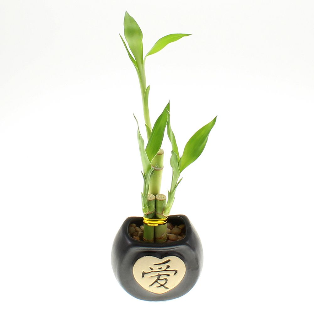 Lucky Bamboo Wedding Favors - Plant gifts, Engagement gifts, Wedding ...