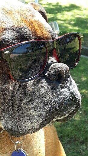 Gomez the dog  My new shades make me look like a stud
