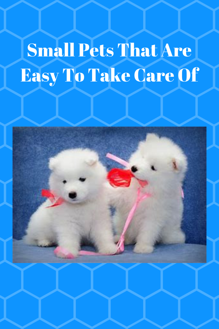 Small Pets That Are Easy To Take Care Of Pets Care Tips Small Pets Low Maintenance Pets Pet Care