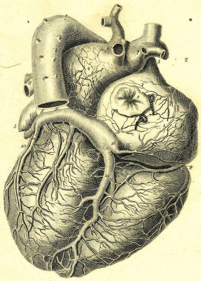 Framed Vintage Medical Print The Human Heart Picture Surgery