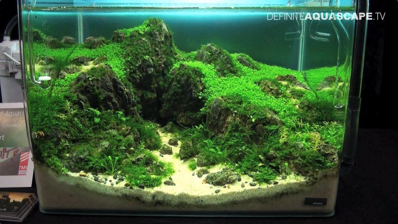 The Art Of The Planted Aquarium 2015 Dennerle Scaper S Tank Nano Compilation Pt 1 Planted Aquarium Aquarium Nano Aquarium