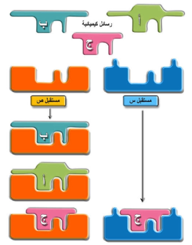 Pin By Chemistry On الحيوية Letters Symbols