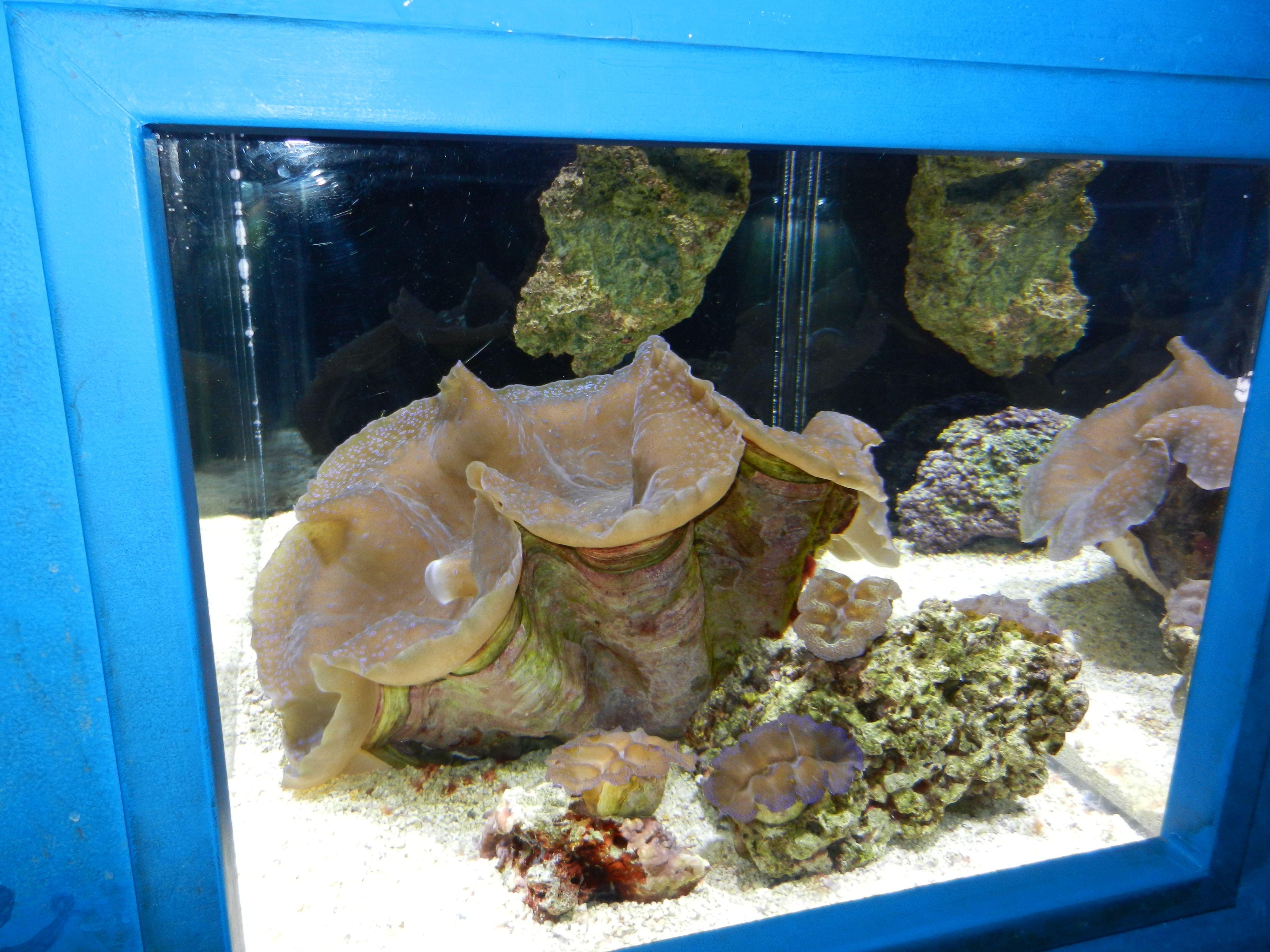 Fish aquarium for sale in pakistan - Aquarium In Albuquerque Giant Clam