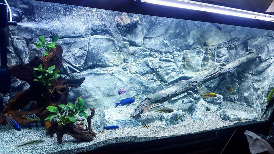 Realistic Fish Tank Background Decorated With Our 3d Background Aquarium Backgrounds Aquarium Fish Tank