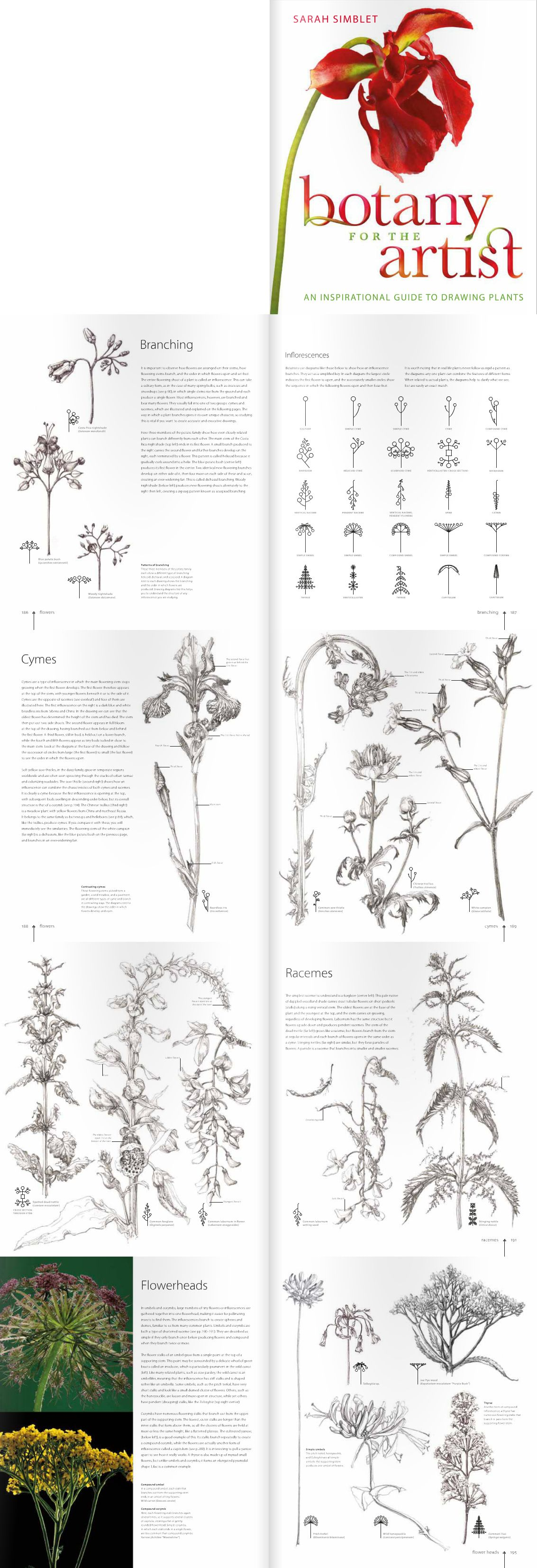 Saran Simblet. Botany for the artist. Branching #Sarah #Simblet ...