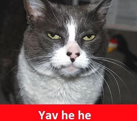 Whatsapp Grup Fotograflari Google Da Ara Komik Kedi Resimleri Komik Kediler Komik