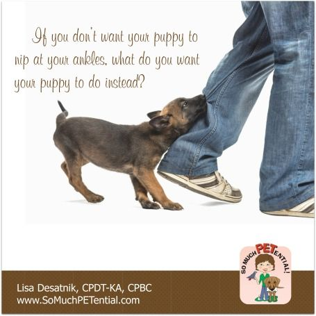 Tips For Stopping Your Puppy From Nipping At Your Ankles By