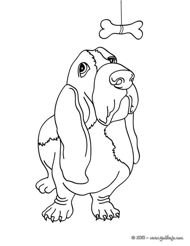Dibujos PERROS para colorear, perro Basset para imprimir | Amores ...