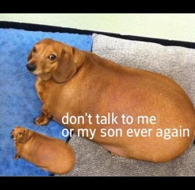 Wonderful Dogo Chubby Adorable Dog - 6188f099ef04cbc982ab620751917551  Collection_319068  .jpg