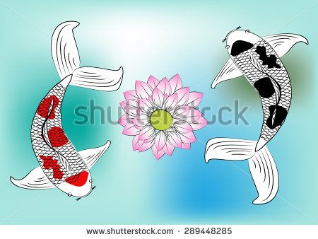 Vector koi fish and lotus flower,colorful koi carp swimming in a pool with aquatic plants and water ripples on  background