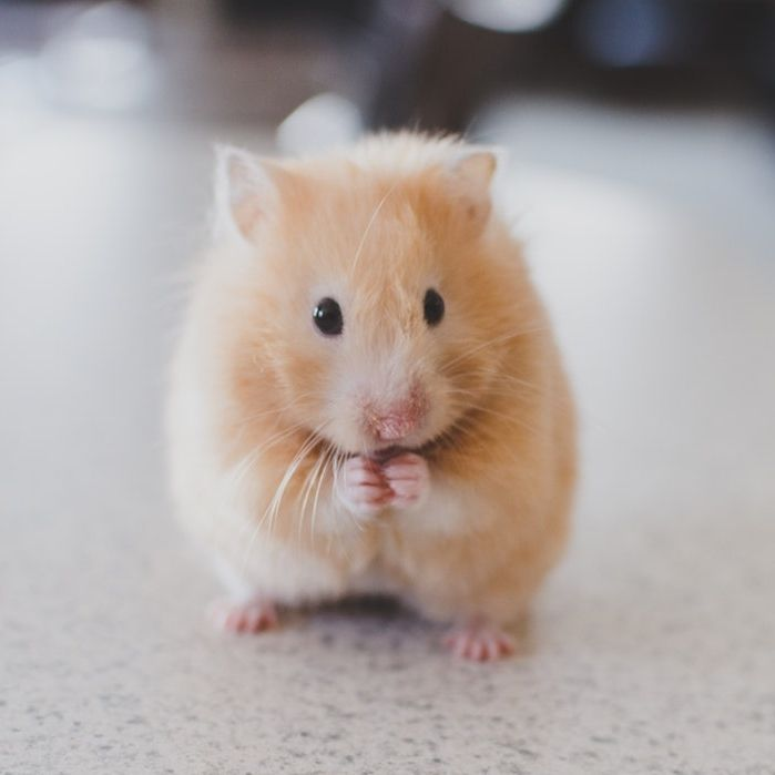 Do You Have Any Food To Share In 2020 Funny Hamsters Cute