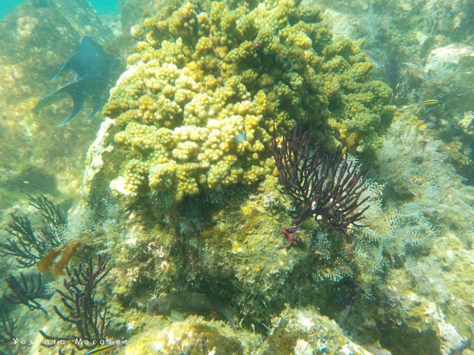 Corales y peces en las Islas Marietas - Puerto Vallarta - Riviera Nayarit - Vallarta By Boat Tours