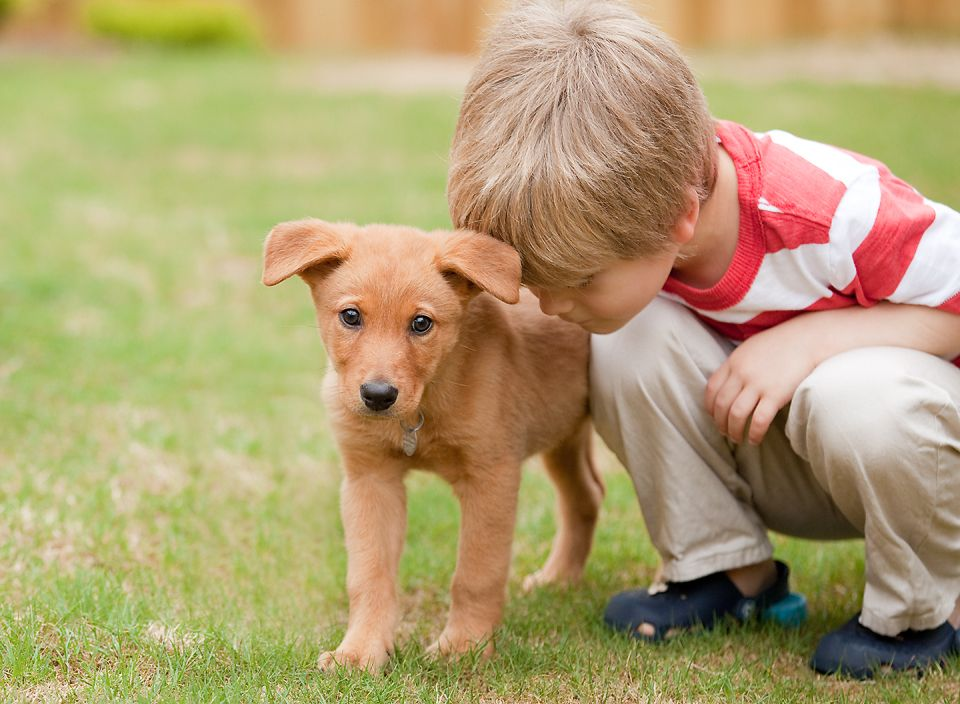 How to microchip your pets