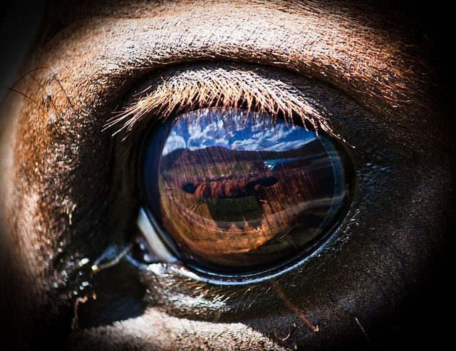 Horse Eye Reflection Reflections Another View Pinterest