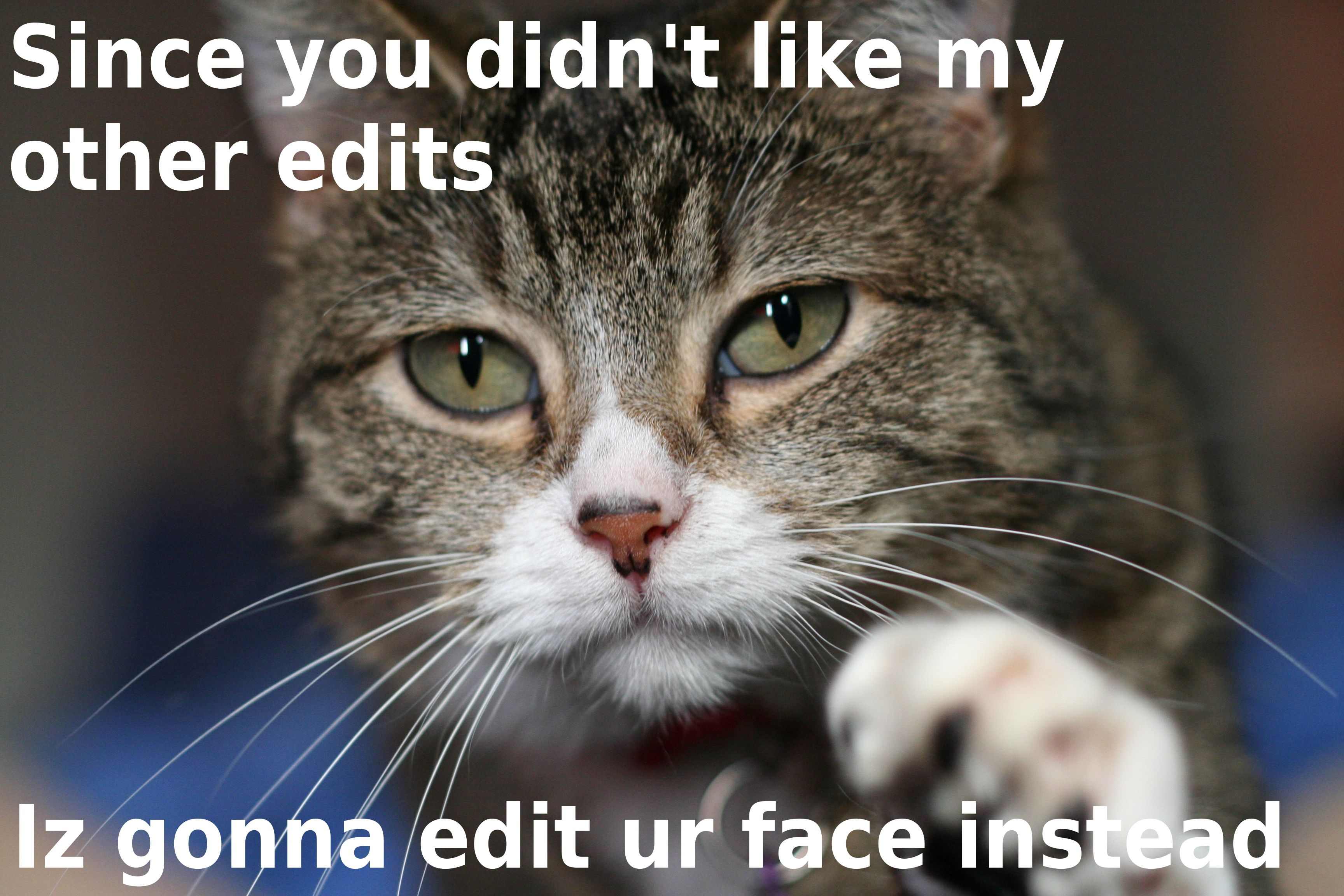 Since You Dont Like My Other Edits Cat Biting Cats Animal Puns