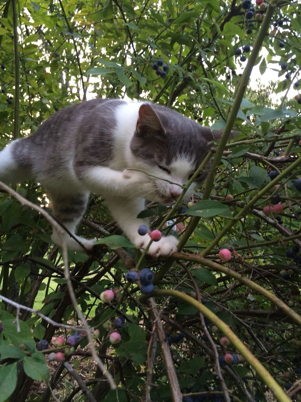 Pin By Elsie On Cats And Kittens With Images Cute Cats And Kittens Fancy Cats Beautiful Cats