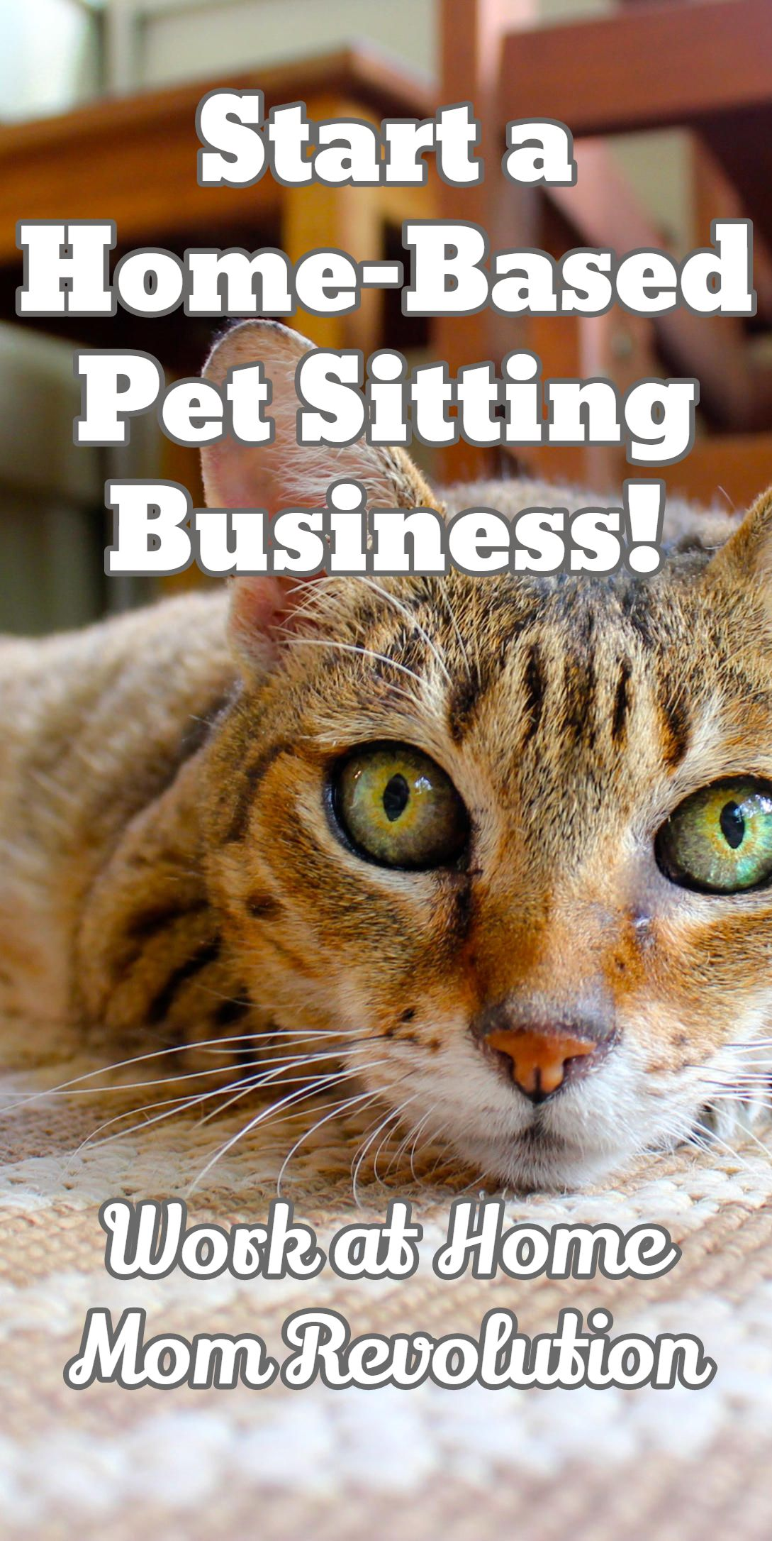 Work at Home: How to Start Your Own Pet Sitting Business ...