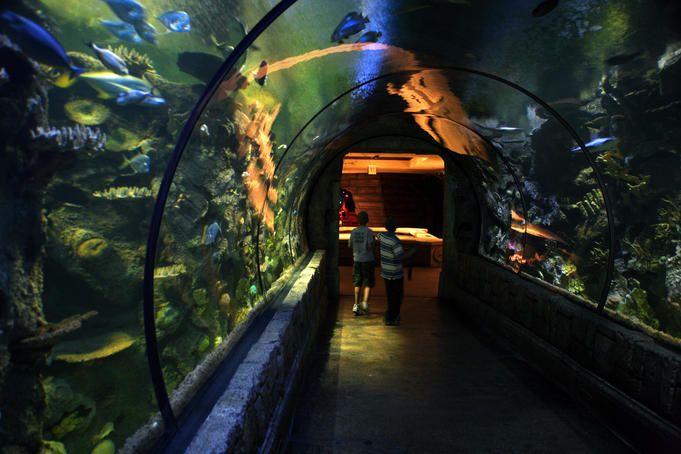 Shark Reef Aquarium, Mandalay Bay.