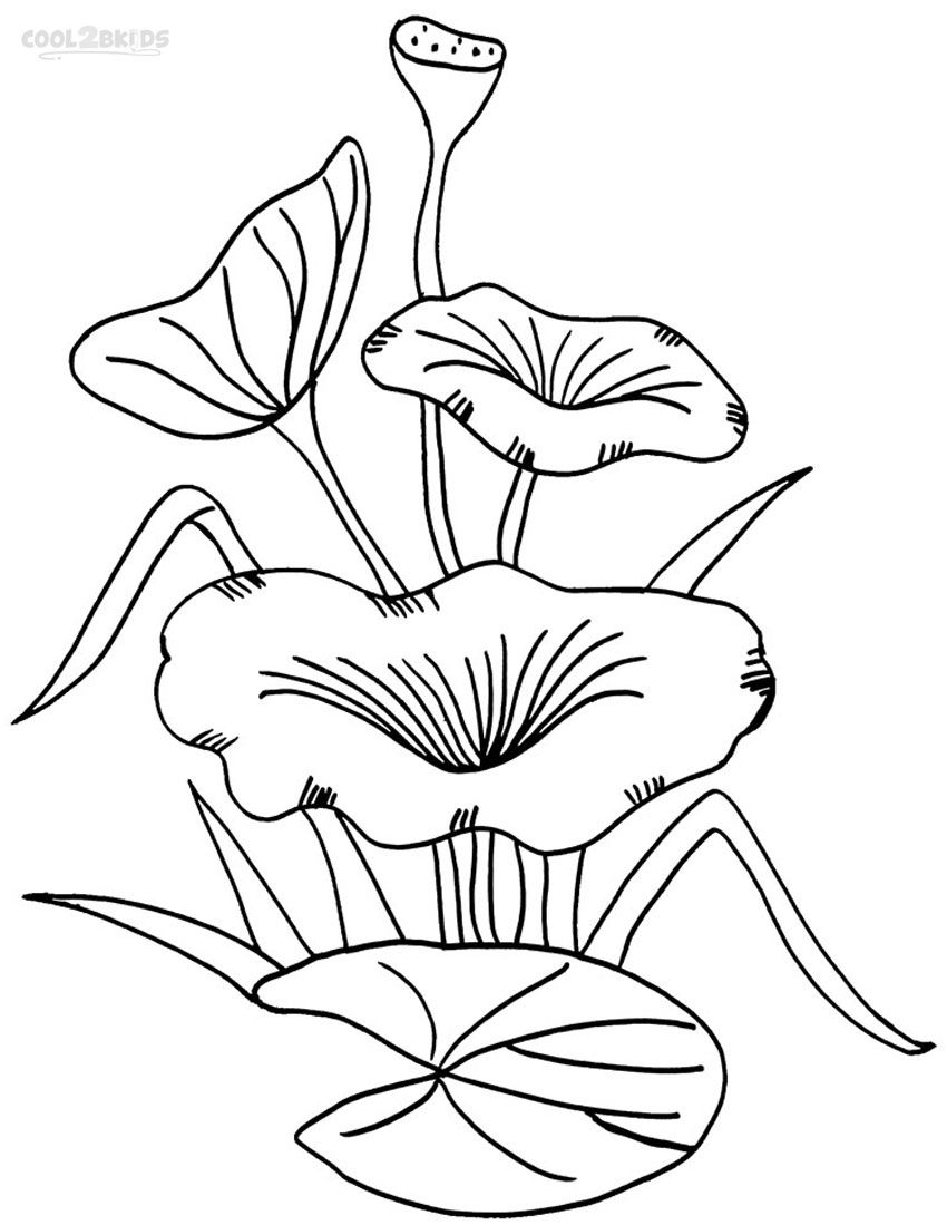 Lily Pad Coloring Pages Flower Coloring Pages