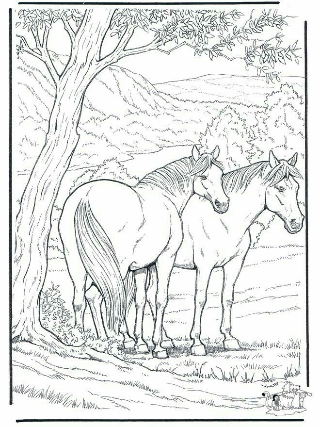 Pin Von Aysen Auf Boyama Malvorlagen Pferde Ausmalbilder Pferde Zum Ausdrucken Ausmalbilder Pferde