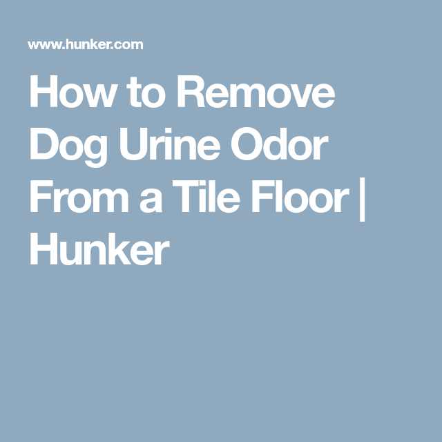 How To Remove Dog Urine Odor From A Tile Floor Urine Odor And Tile - How to clean dog urine from tile floors