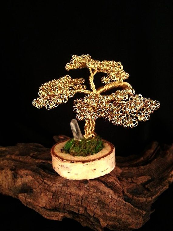 Ancient Japanese Bonsai Art Which Embodies Patience Combined With