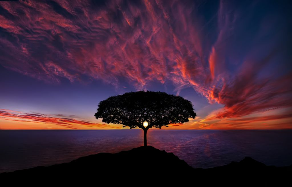 Tree In Sunset | High Resolution Photography