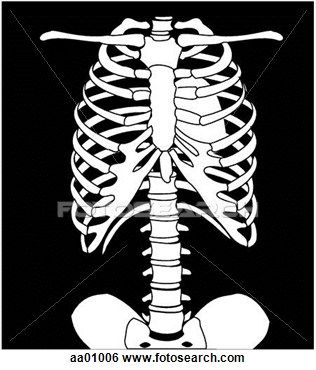 30+ Chest x ray clipart info