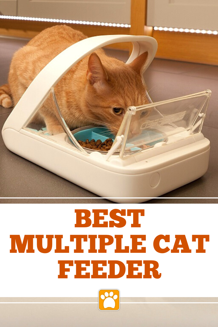 Best Automatic Cat Feeder for Multiple Cats Cat feeder