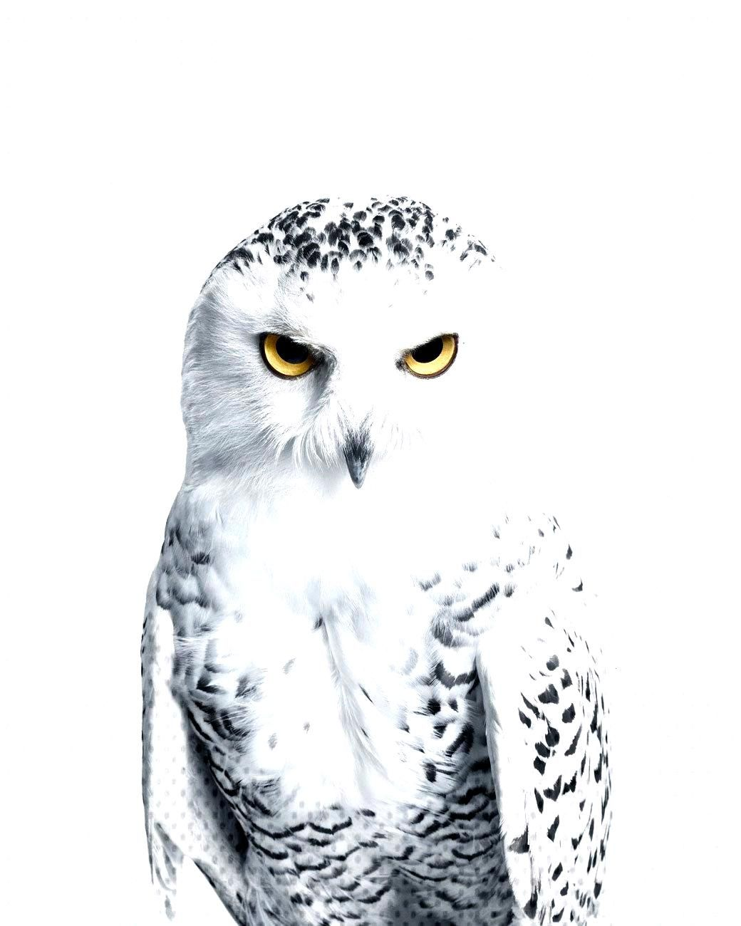 Randal Ford / The Animal Portrait Collection® / Snowy Owl No. 3 / Photography / 2016You can find S