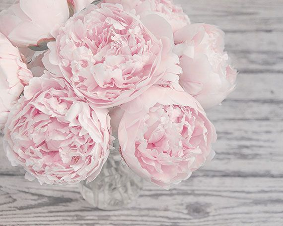 The Pink Peonies Custom Flower Photography Pink Peonies Pink And Gray Shabby Chic Decorating Inspiration