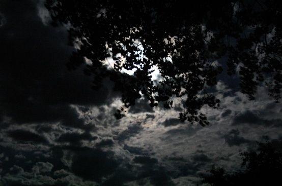 moonlight   The Moon   Night skies, Night, Moonlight