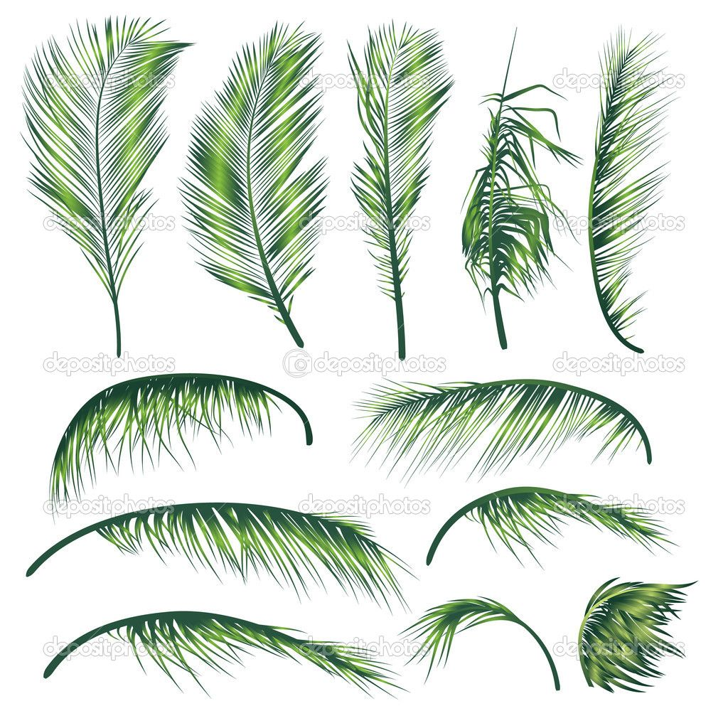 vector coconut tree leaves - Google Search | Gss Angry Bird Keyart ...