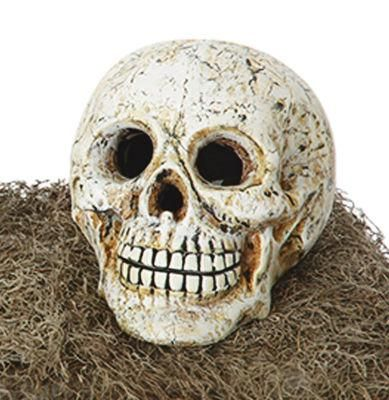 Halloween White Plaster Skull Halloween Fun Pinterest - skull halloween decorations