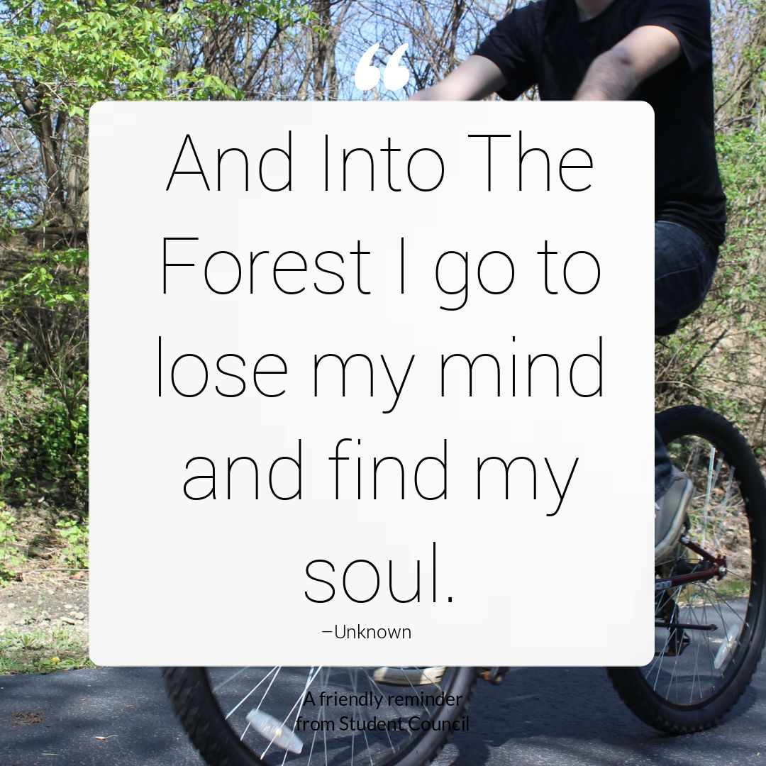 And Into The Forest I Go To Lose My Mind And Fins My Soul