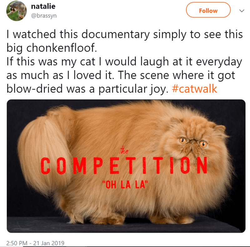 People Are In Love With This Fluffy Cat Starring At Netflix S New Documentary About Cat Shows Animal Antics Funny Cats Cats