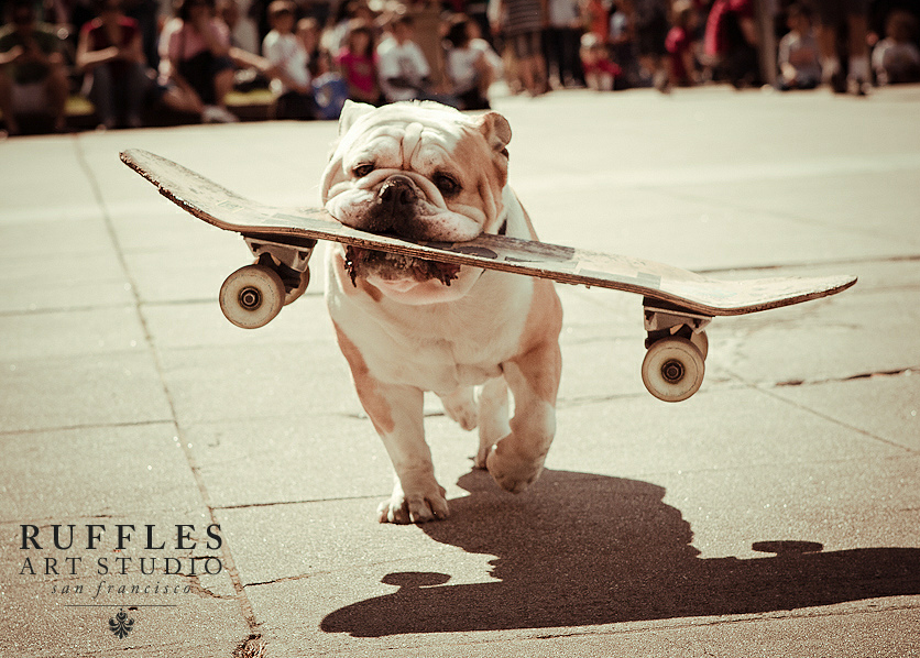 They Are Famous For It Bulldogs On Skateboards Somehow Bulldogs Really Like Skating And Not Only Do They Like It They Are Great At Bulldog Dogs Bulldog Breeds