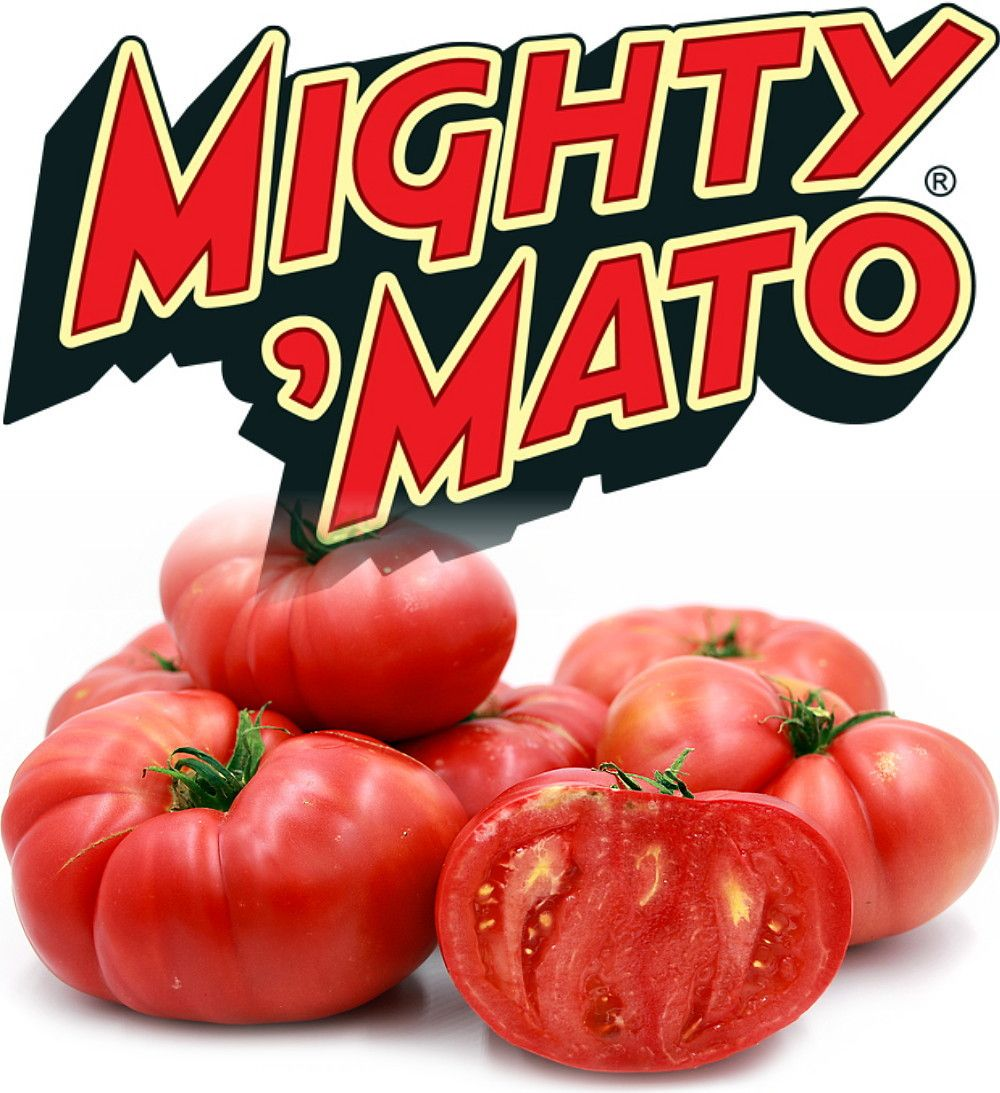 Mighty Mato Grafted Brandywine Tomato Plant Easy To 400 x 300