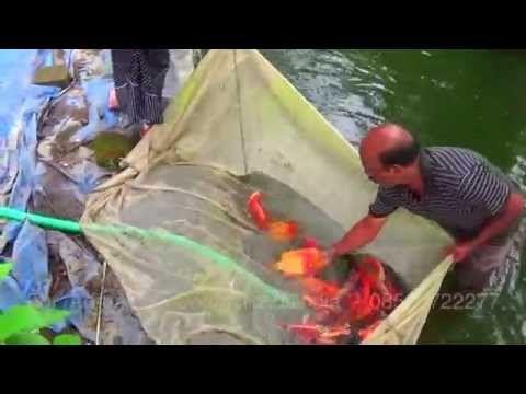 Karthyayani Fish Farm Chalakudy Aquariums And Water Pets Fish