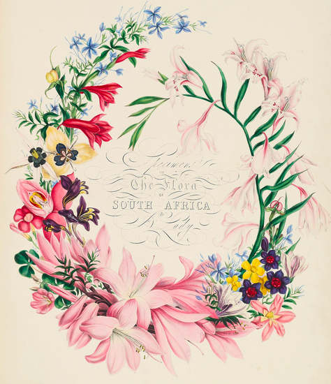 I adore floral botanical art so much! | TIGERS TO LILIES