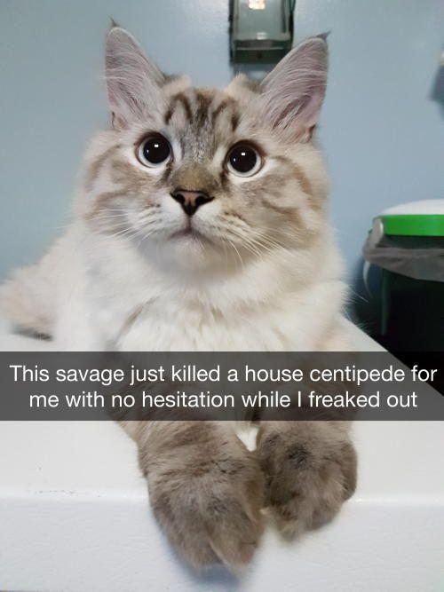 42 lustige Katzen, zum Ihres Tages zu erhellen - Tiere Blog #funnykittens